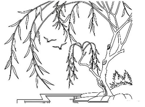 柳树简笔画 小猴种 柳树