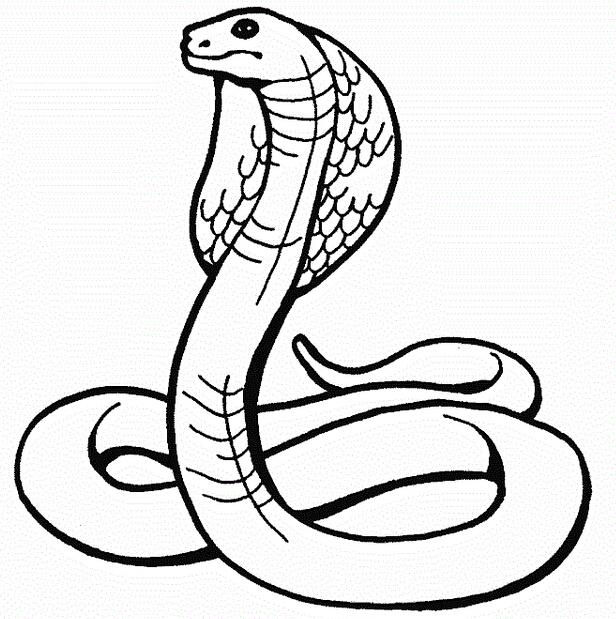 动物简笔画 蛇 > 关于蛇的简笔画:蛇王的白日梦